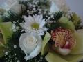 Virágok  (13) (1024x681)