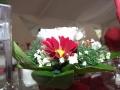 Virágok  (26) (1024x768)