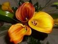 Virágok  (51) (1024x768)